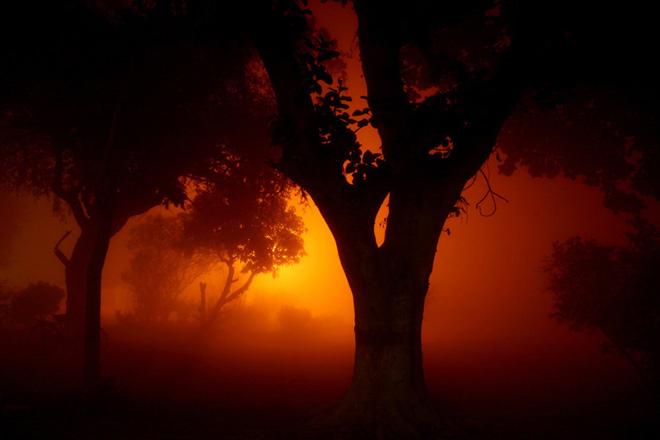 Cand lumina vine din spate: 30 de fotografii grozave! - Poza 22