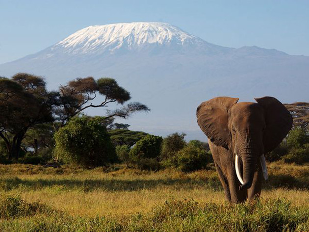 10 poze superbe: Africa - Poza 1