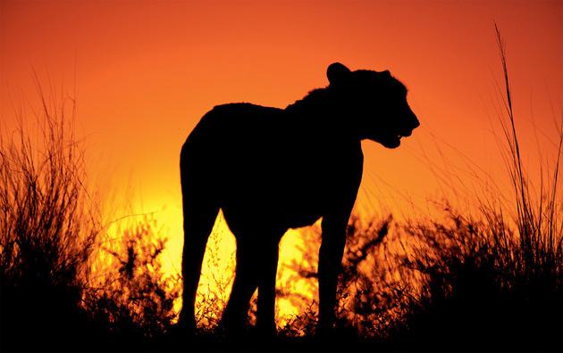 10 poze superbe: Africa - Poza 10