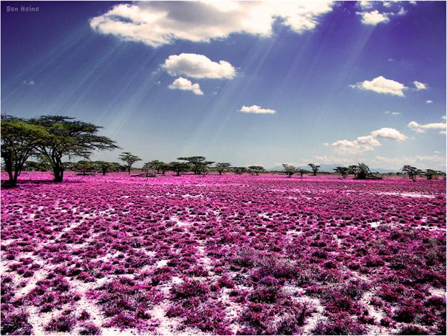 10 poze superbe: Africa - Poza 2