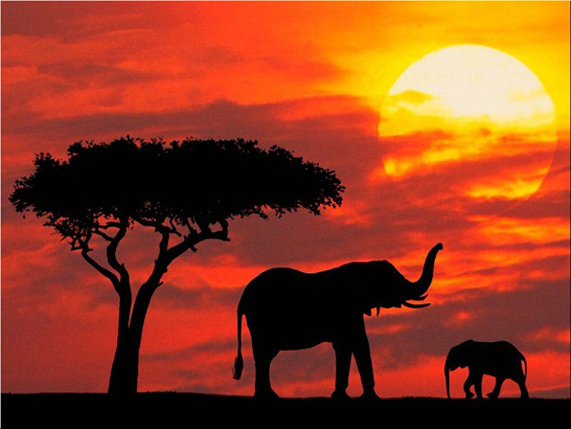 10 poze superbe: Africa - Poza 3