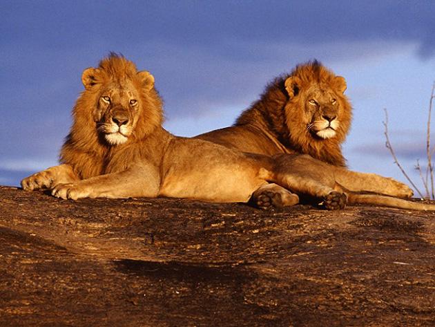 10 poze superbe: Africa - Poza 7