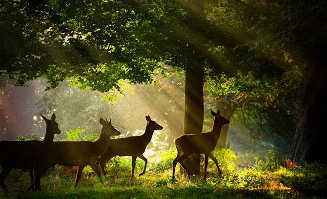 Natura in 22 de fotografii superbe - Poza 10