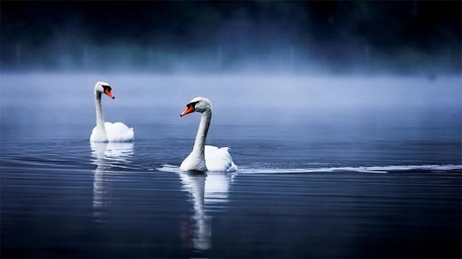 Natura in 22 de fotografii superbe - Poza 12