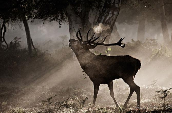 Natura in 22 de fotografii superbe - Poza 13