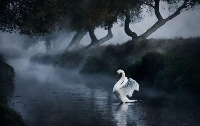 Natura in 22 de fotografii superbe - Poza 14