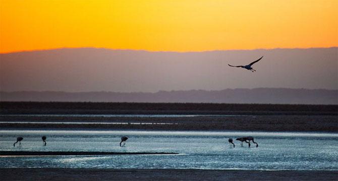 Natura in 22 de fotografii superbe - Poza 19