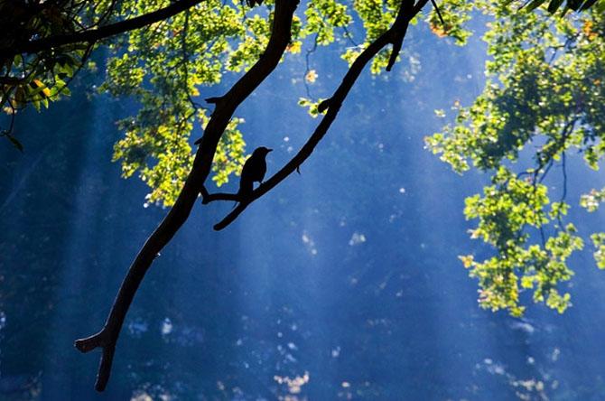 Natura in 22 de fotografii superbe - Poza 4