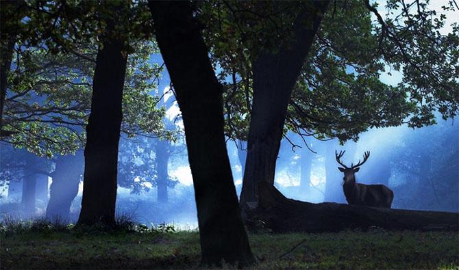 Natura in 22 de fotografii superbe - Poza 6