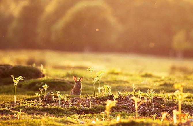 Natura in 22 de fotografii superbe - Poza 8
