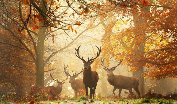 Natura in 22 de fotografii superbe - Poza 9