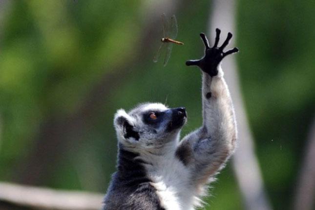 Impresionant aer de vedeta: 29 de poze cu animale - Poza 10