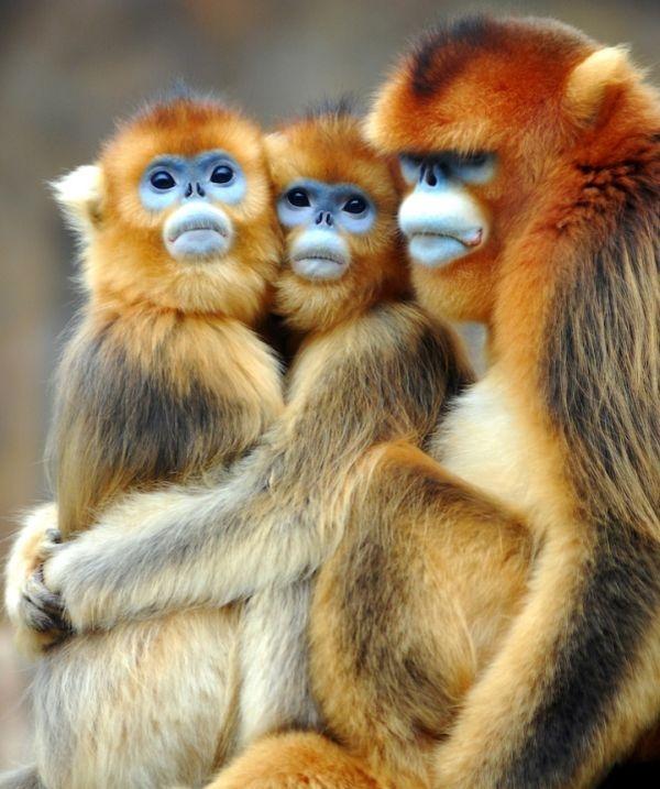 Impresionant aer de vedeta: 29 de poze cu animale - Poza 13