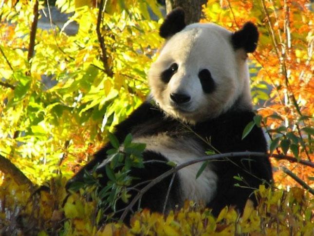 Impresionant aer de vedeta: 29 de poze cu animale - Poza 16
