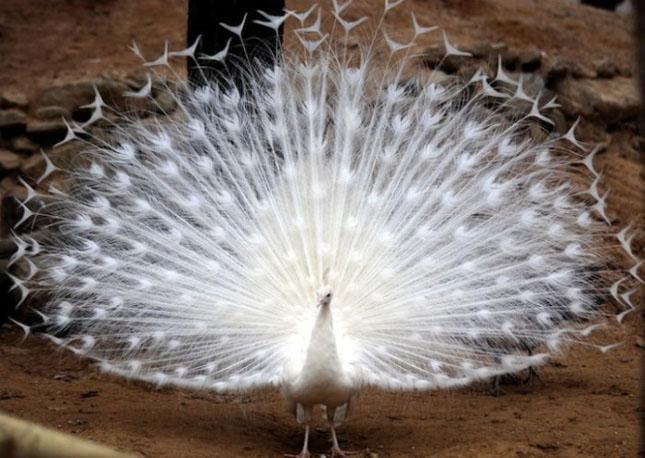 Impresionant aer de vedeta: 29 de poze cu animale - Poza 17
