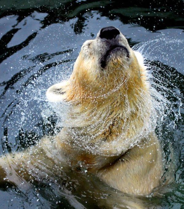 Impresionant aer de vedeta: 29 de poze cu animale - Poza 18