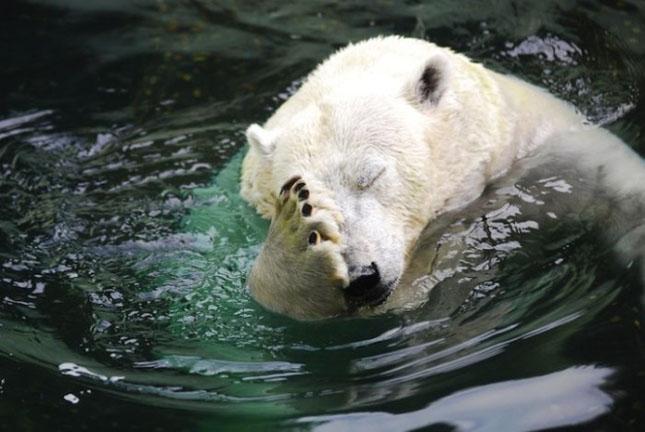 Impresionant aer de vedeta: 29 de poze cu animale - Poza 19