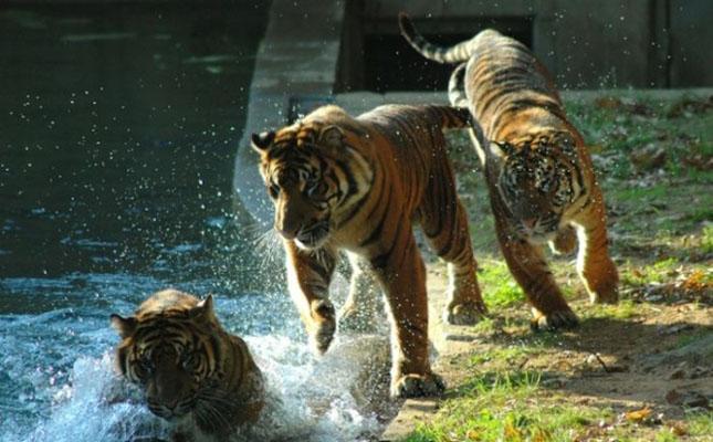 Impresionant aer de vedeta: 29 de poze cu animale - Poza 22