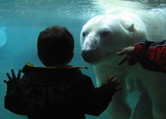 Impresionant aer de vedeta: 29 de poze cu animale - Poza 26