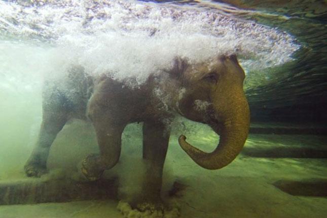 Impresionant aer de vedeta: 29 de poze cu animale - Poza 29