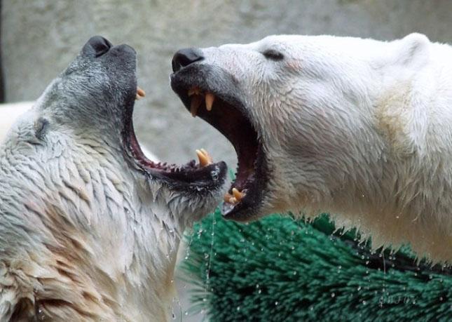 Impresionant aer de vedeta: 29 de poze cu animale - Poza 4