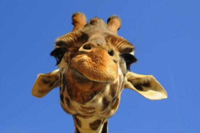 Impresionant aer de vedeta: 29 de poze cu animale - Poza 6