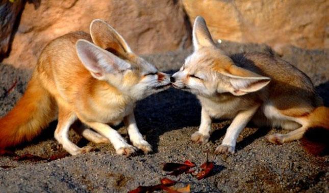 Impresionant aer de vedeta: 29 de poze cu animale - Poza 8