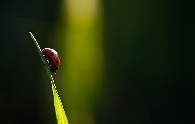 Natura, un deliciu vizual - Poza 18