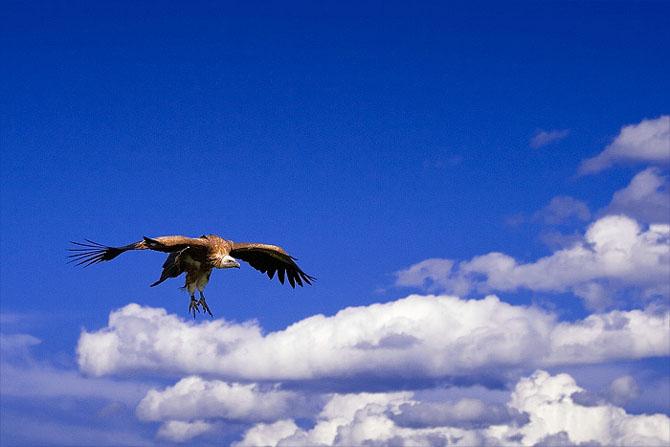 Natura, un deliciu vizual - Poza 2
