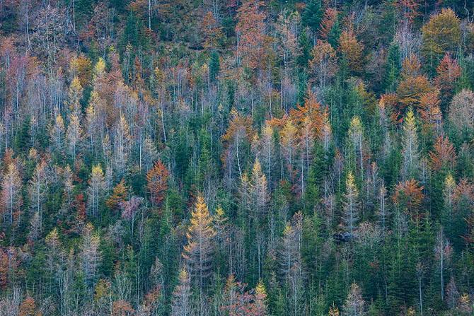 Natura, un deliciu vizual - Poza 21