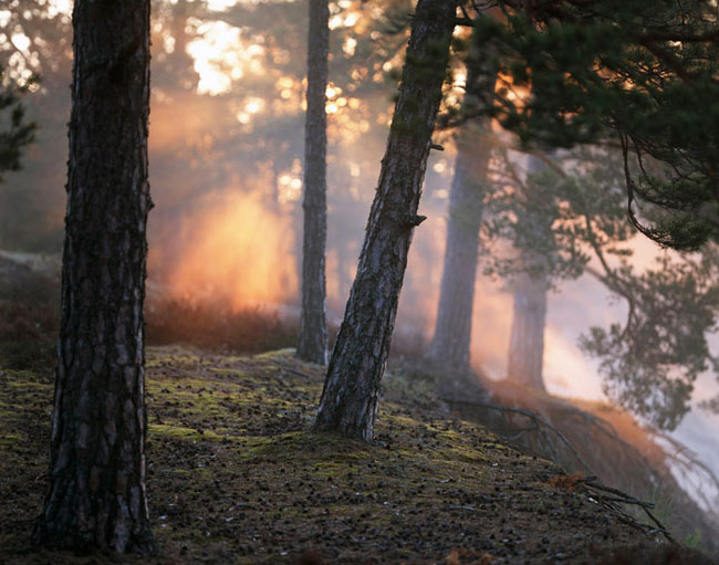 Natura surprinsa in fotografii: patru anotimpuri - Poza 10