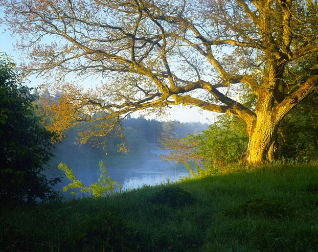 Natura surprinsa in fotografii: patru anotimpuri - Poza 12