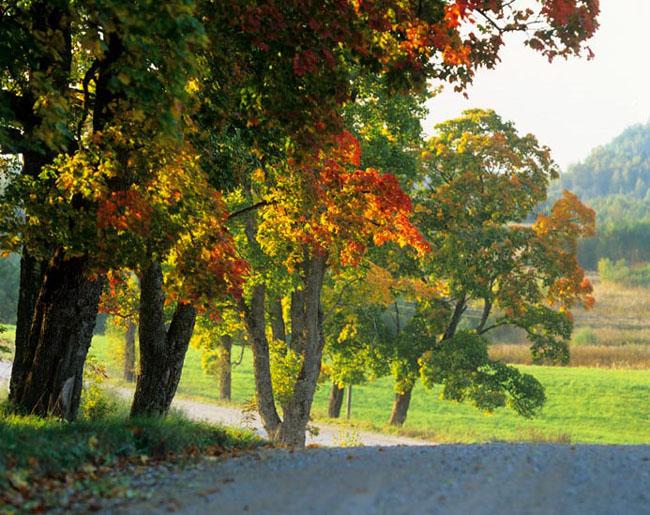 Natura surprinsa in fotografii: patru anotimpuri - Poza 14
