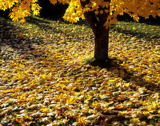 Natura surprinsa in fotografii: patru anotimpuri - Poza 15
