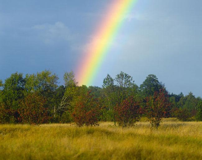 Natura surprinsa in fotografii: patru anotimpuri - Poza 19