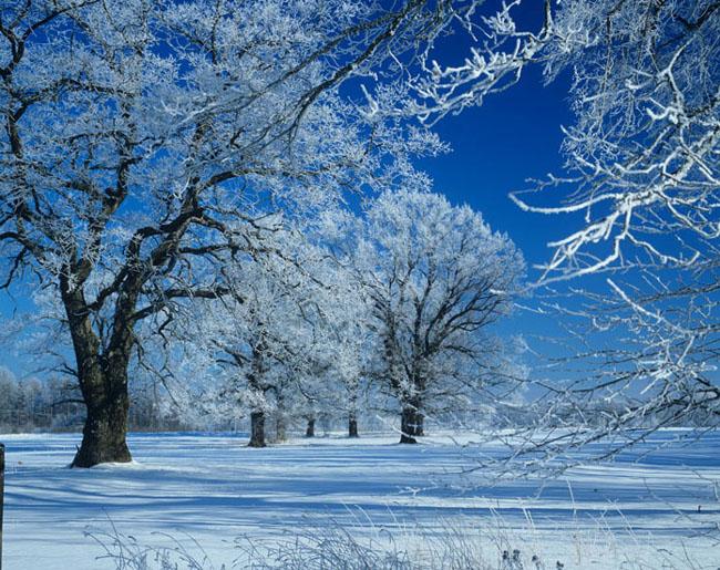 Natura surprinsa in fotografii: patru anotimpuri - Poza 21