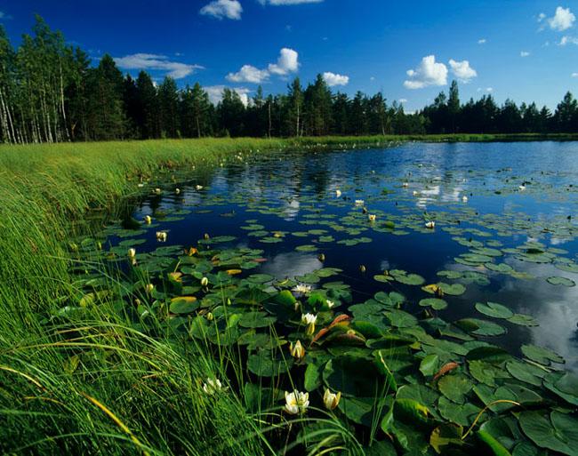 Natura surprinsa in fotografii: patru anotimpuri - Poza 1