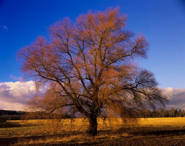 Natura surprinsa in fotografii: patru anotimpuri - Poza 8