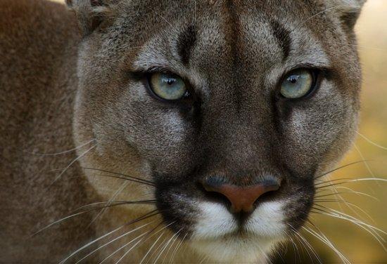 27 de fotografii cu animale! - Poza 15