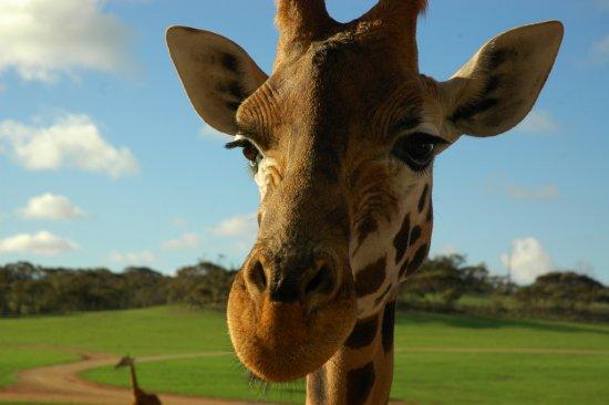 27 de fotografii cu animale! - Poza 24