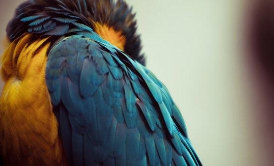 27 de fotografii cu animale! - Poza 5