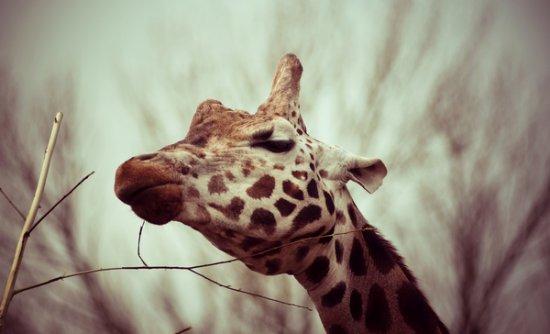 27 de fotografii cu animale! - Poza 6