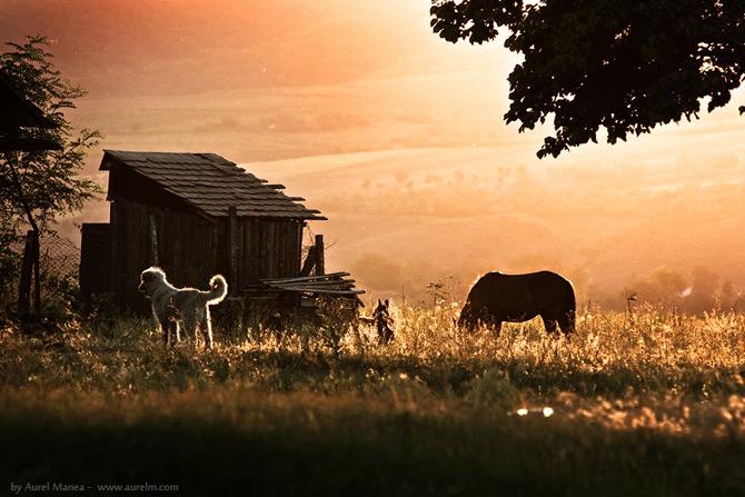 15 fotografii de Aurel Manea - Poza 10