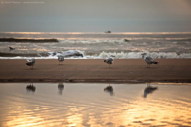 15 fotografii de Aurel Manea - Poza 13