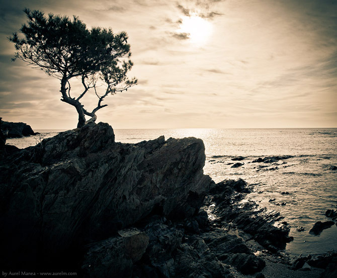 15 fotografii de Aurel Manea - Poza 7