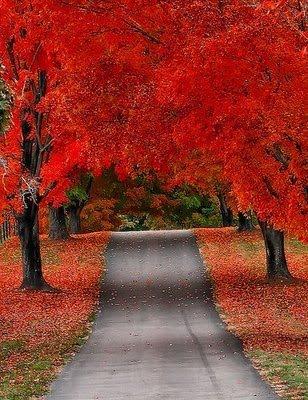 Ai vrea sa mergi pe aceste drumuri? - Poza 5