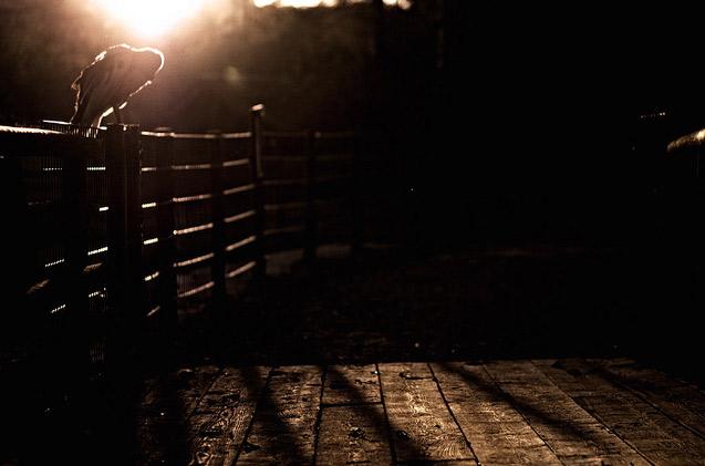 Cand lumina vine din spate: 30 de fotografii grozave! - Poza 5