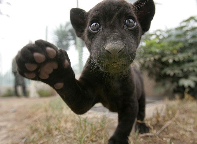17 poze cu animale fericite - Poza 11
