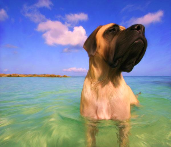 Atentie: Animale simpatice in 45 de poze! - Poza 9