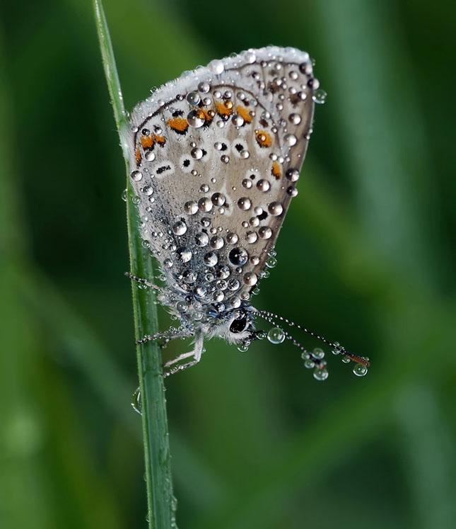 47 imagini cu roua, o splendoare naturala - Poza 4